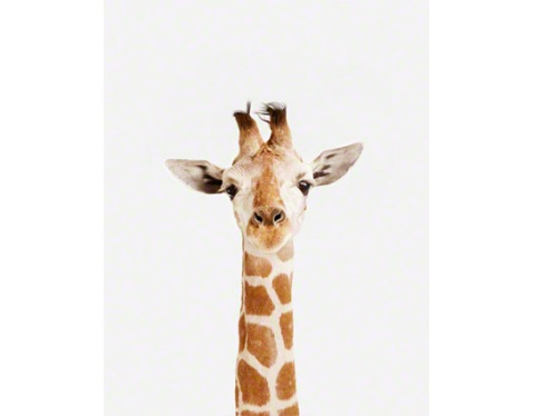 Baby-Giraffe_art-for-nursery-01