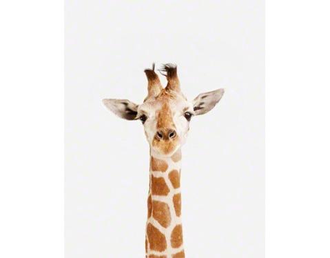 Baby-Giraffe_art-for-nursery-01