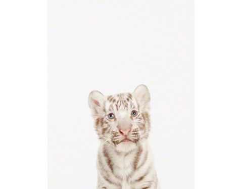 Baby-White-Tiger-art-for-kids sharon montrose