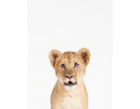 Lion-Cub-Art-For-Nursery