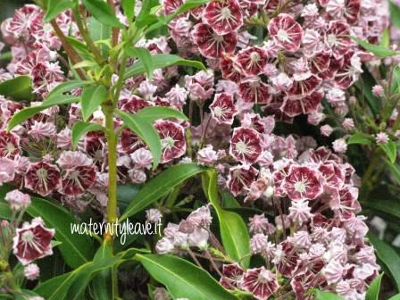 flor 13 torino poesia