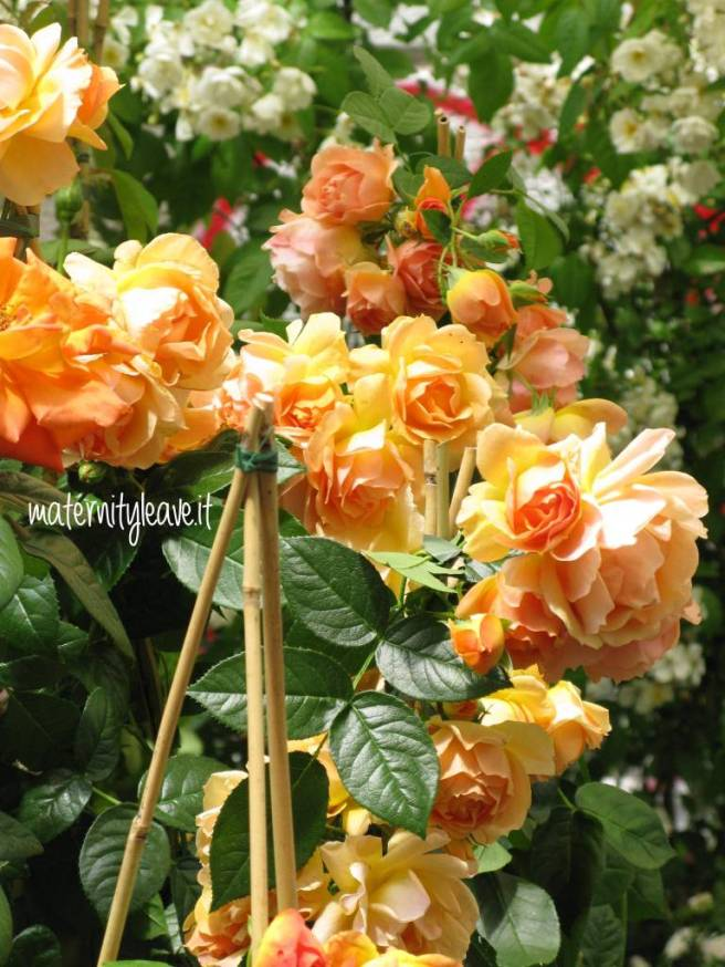 flor 13 torino rosa arancio