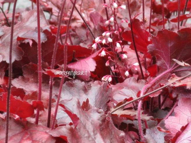 flor13 torino rosso